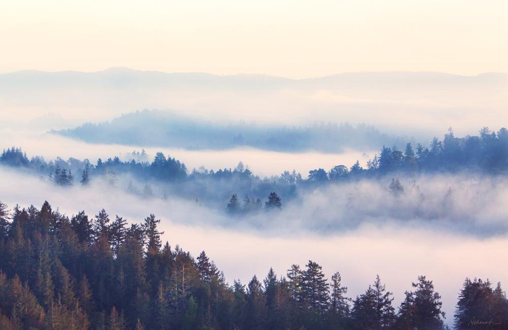 Santa Cruz Mountains - Karen Asherah