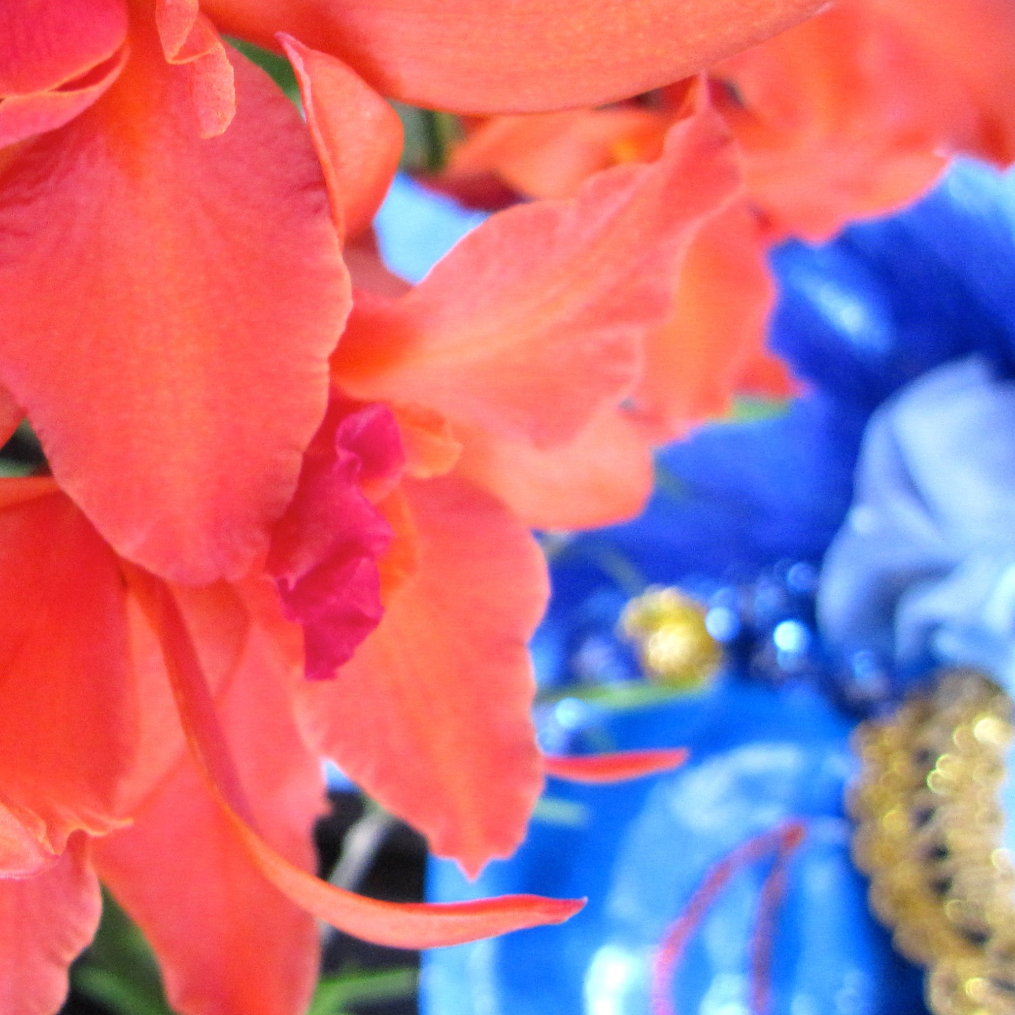 Orchids 2 - Lee Taiz