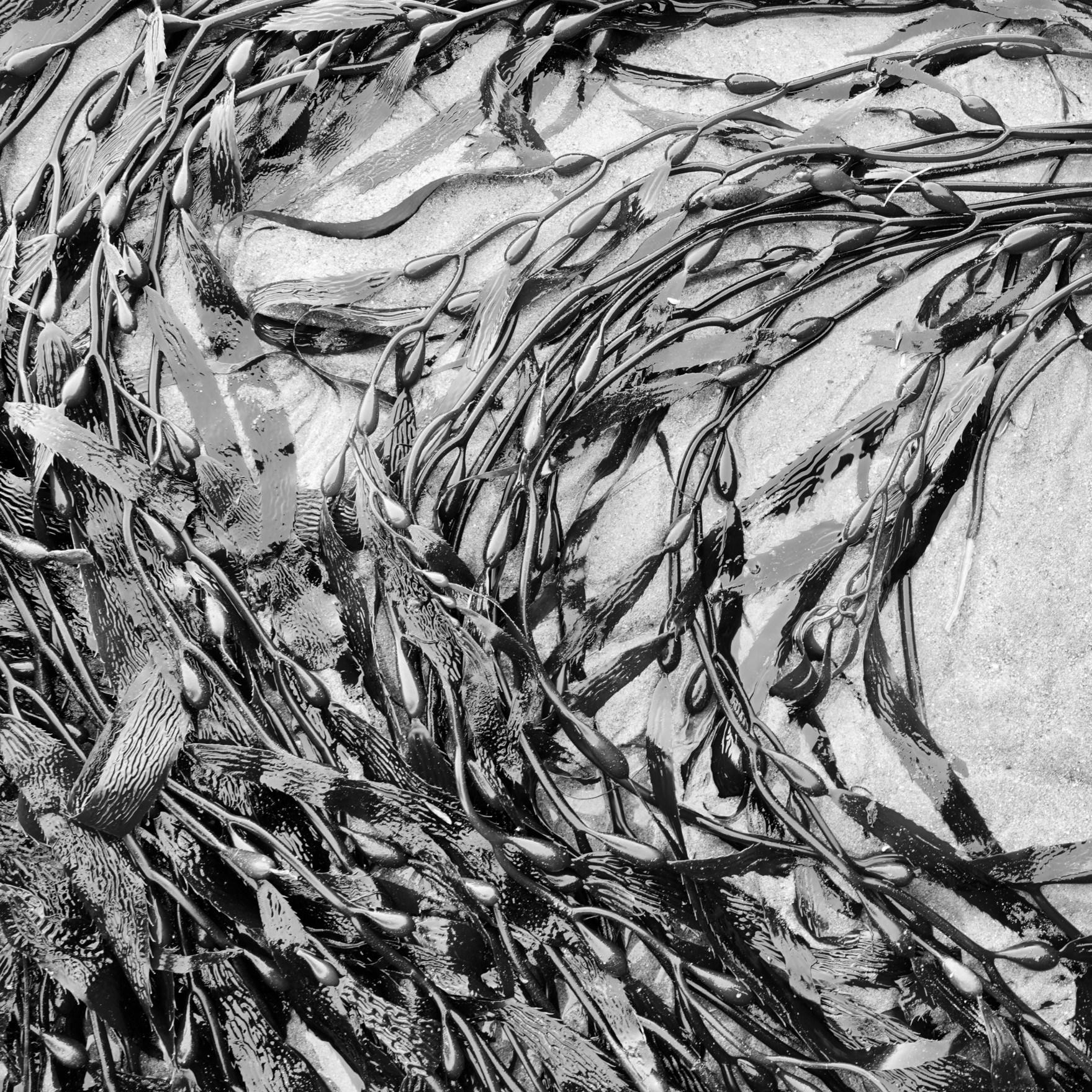 Seaweed - Orenda Randuch