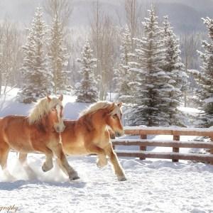 Winter in Colorado - Bari Lee Photography