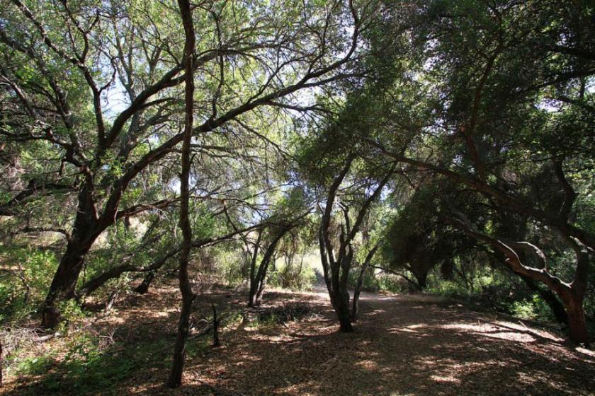 Poway trail