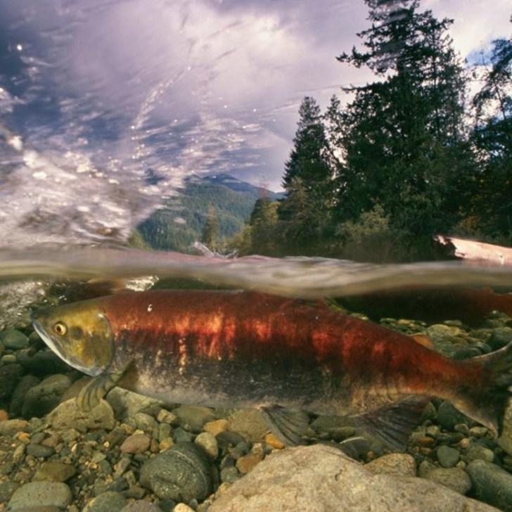 Photo courtesy Patagonia.