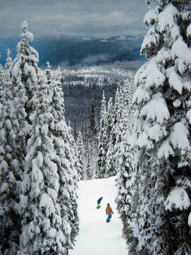 Two people skiing framed by tall trees
