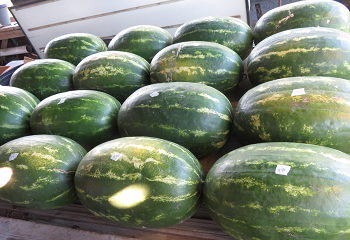 Cad's Watermelon Selection