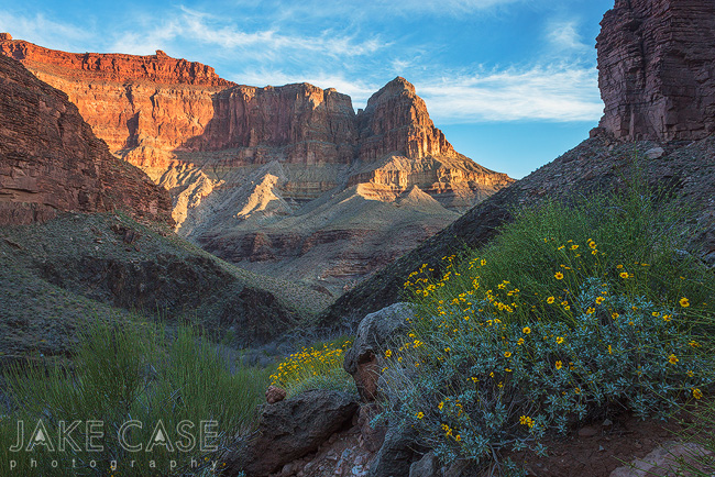 Grand Canyon Spring Wildflowers