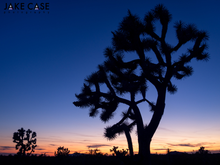 joshua tree sunset shot with olympus