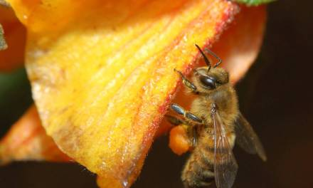 Honey Bees Feeding Us More Than Honey