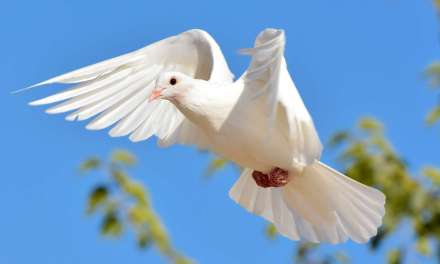 Wondrous White Doves