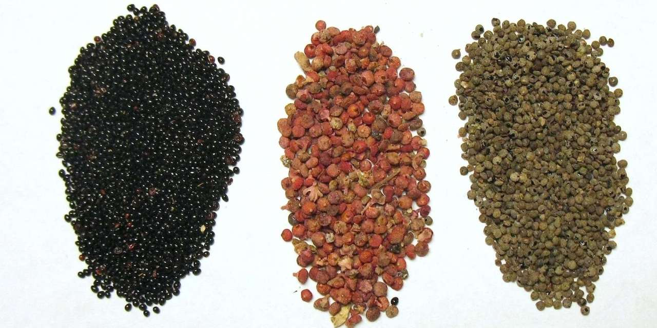 Quinoa's Cousins Pitseed Goosefoot, Red-root Amaranth, & Red-Seeded Quinoa