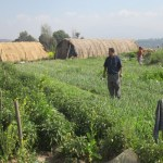 rajendra-nhisutu-in-our-organic-farming-field