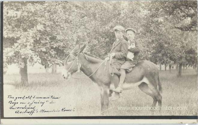 Adolph Aschoff Marmot Oregon