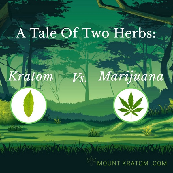 article that compares kratom to marijuana for pain