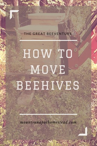 how to move beehives