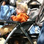 Disney's Great Stroller Debate: Solved!