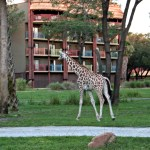 Everything You Ever Wanted To Know About Animal Kingdom Lodge