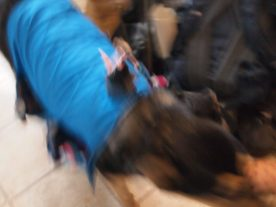Another blurred picture of dog and vaarks