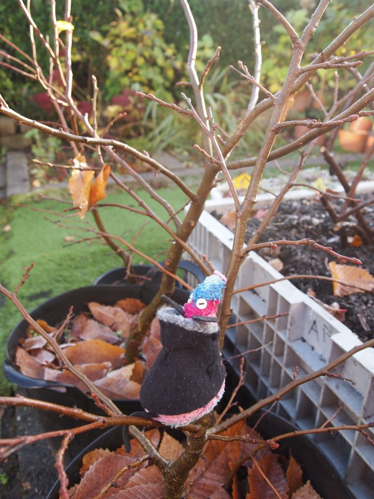 Ratvaark sits in a bare chestnut tree in a tub