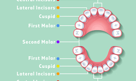 How many teeth do humans have? Kids v adult teeth.