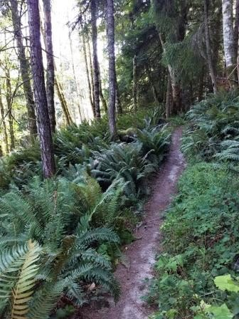 Forest Bathing San Juan Island with Stephanie Prima