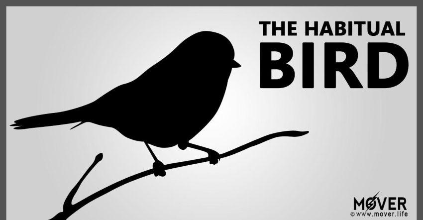 The-Habitual-Bird