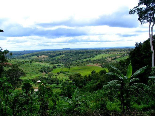 jungle Ratanakiri