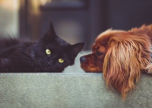 A black cat and a brown dog