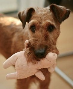A dog and its toy