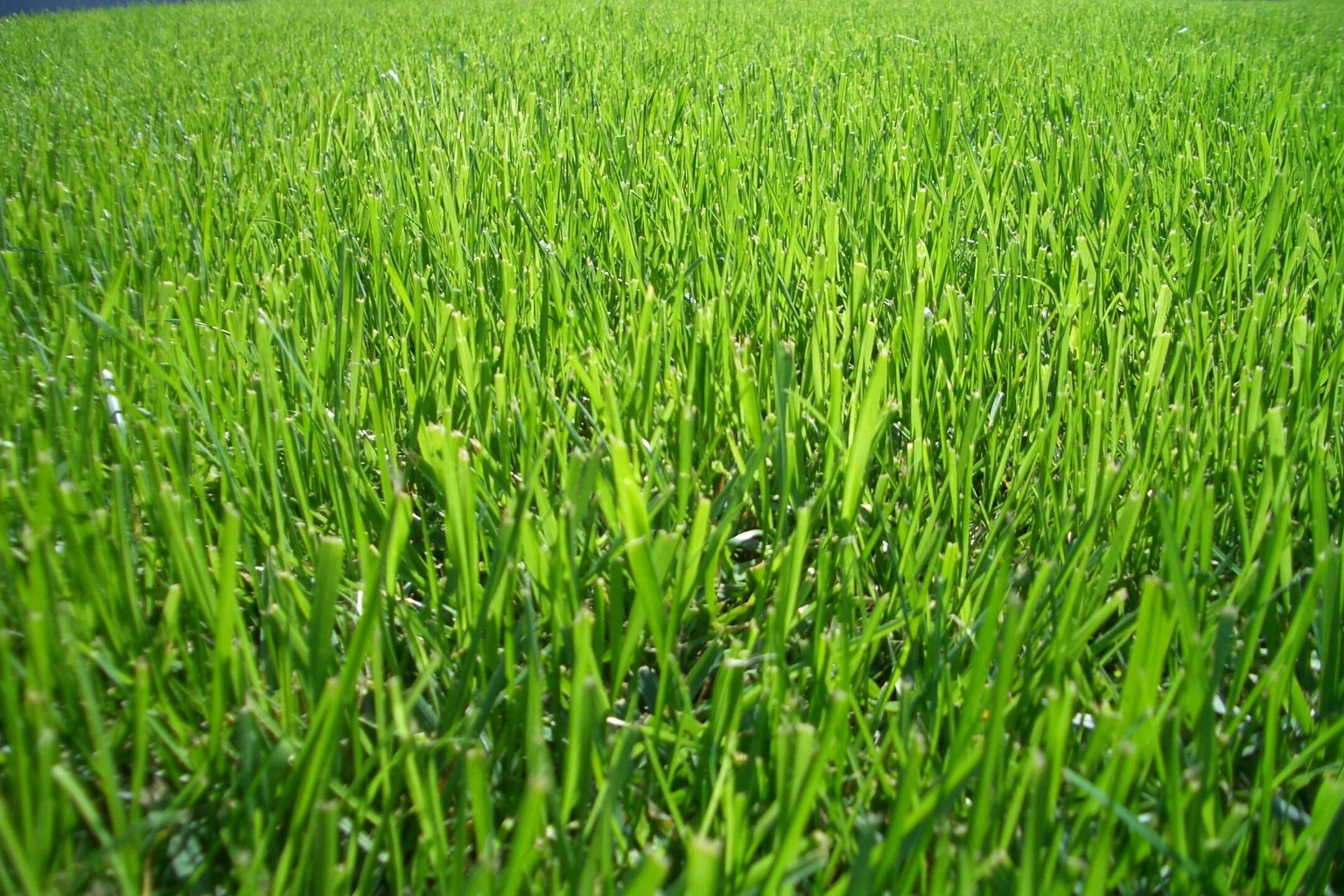 Lawn And Leaf Fertilizer