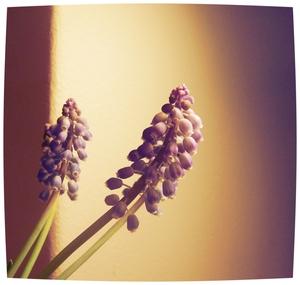 O wind, als winter komt, laat lente niet lang op zich wachten. Percy Bysshe Shelley