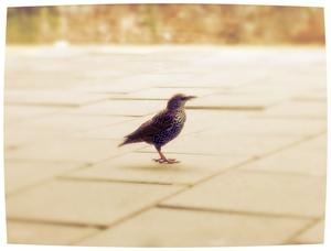 De vogel van wijsheid vliegt laag, en zoekt zijn voedsel onder hagen; zelfs de adelaar zou verhongeren als hij altijd hoog in de lucht vloog, Afstekend tegen de zon. Walter Savage Landor
