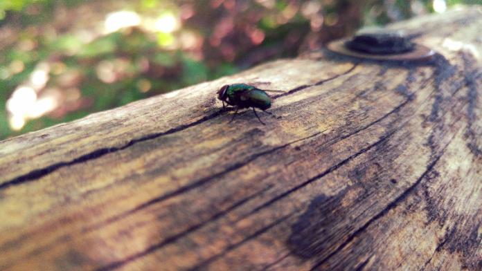 Er zijn mensen die nog geen vlieg kwaad zouden doen, omdat ze niet in staat zijn er een te vangen. Helmut Qualtinger
