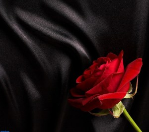 rose_on_silk