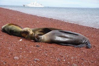 Sea Lions Lounging in Galapagos Islands