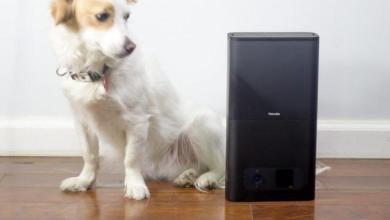 Photo of Petcube Bites Review: ne laissez plus jamais vos animaux de compagnie seuls