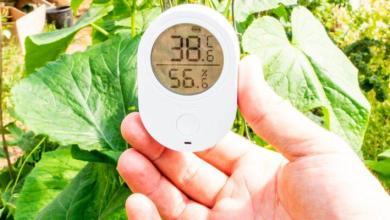 Photo of Plus de plantes mortes, avec le moniteur Wi-Fi de température et d'humidité Govee