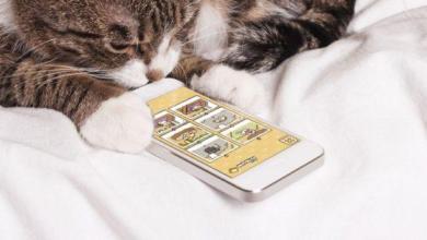 Photo of Aimez-vous les chats? 8 jeux pour smartphones pour les amoureux des chats