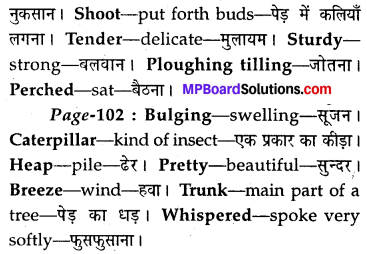 MP Board Class 8th Special English Chapter 12 The Cherry Tree 11