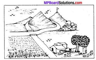 MP Board Class 8th Special English Revision Exercises 1 2