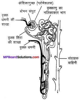 MP Board Class 10th Science Solutions Chapter 6 जैव प्रक्रम 1