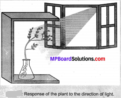 MP Board Class 10th Science Solutions Chapter 7 Control and Coordination 3