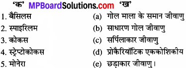 MP Board Class 11th Biology Solutions Chapter 2 जीव जगत का वर्गीकरण - 5