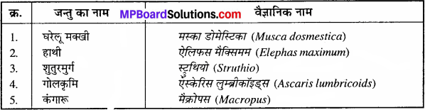 MP Board Class 11th Biology Solutions Chapter 4 प्राणि जगत - 6