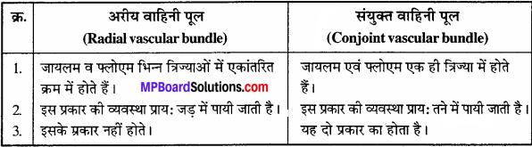 MP Board Class 11th Biology Solutions Chapter 6 पुष्पी पादपों का शारीर - 18