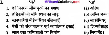 MP Board Class 11th Biology Solutions Chapter 7 प्राणियों में संरचनात्मक संगठन - 12