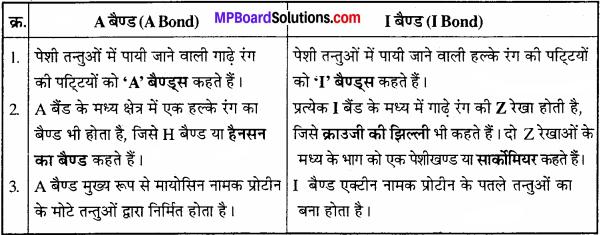 MP Board Class 11th Biology Solutions Chapter 7 प्राणियों में संरचनात्मक संगठन - 19
