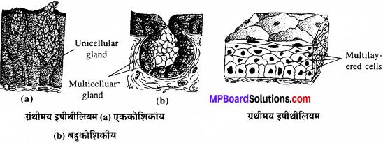 MP Board Class 11th Biology Solutions Chapter 7 प्राणियों में संरचनात्मक संगठन - 4