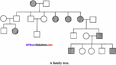 MP Board Class 12th Biology Important Questions Chapter 5 Principles of Inheritance and Variation 17