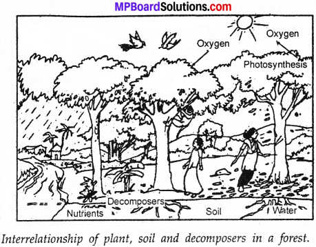 MP Board Class 7th Science Solutions Chapter 17 Forests Our Lifeline img 4
