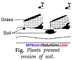 MP Board Class 7th Science Solutions Chapter 9 Soil img-13