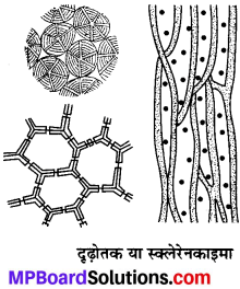 MP Board Class 9th Science Solutions Chapter 6 ऊतक image 12